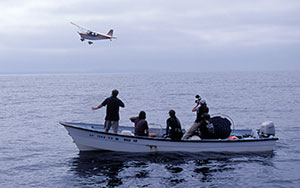 Aircraft helps researchers find sunfish Aircraft helps the tagging team locate sunfish