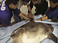 Affixing the SPOT to the mola
