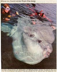 2300+ kg sunfish