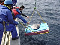 Releasing the mola to ply the waters and collect data.