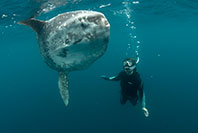 Tierney with an ocean sunfish