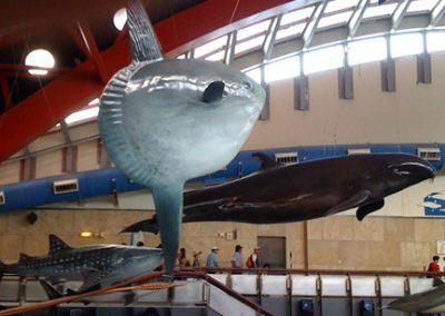 Mola model