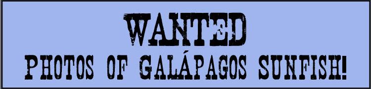 WANTED Photos of Galapagos Sunfish!